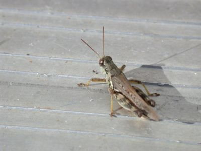 The Sound of Crickets Chirping in the Backyard | God's