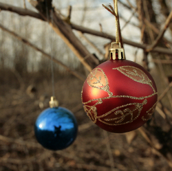 A Christmas Ornament in a Dry Tree