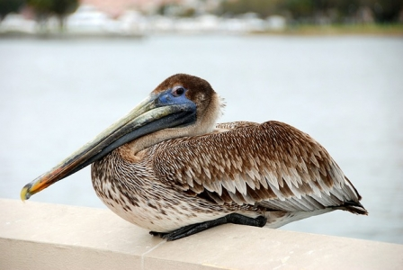 A bird with a very suspicious look and mind - wasit pitched a timeshare vacation proposal?