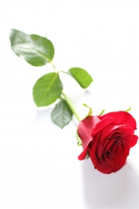 single red_rose