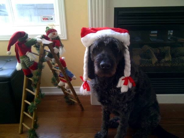 dog christmas domi