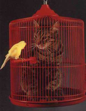Funny Cat Pictures -  in Bird Cage Dream