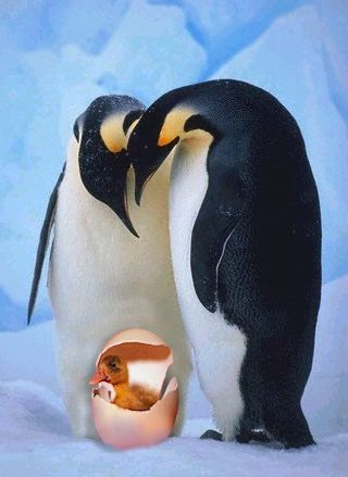 Funny Pictures of Penguins and Hatching Duck Egg