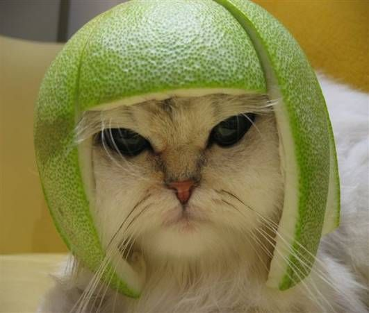 Funny Cat Pictures -  With Melon On Head