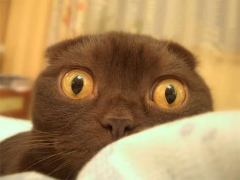 Funny Cat Pictures -  Surprised By Puppy
