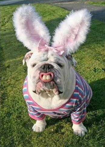 funny picture of dog Easter bunny