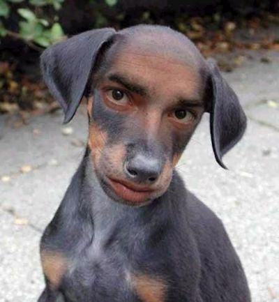 Funny Pictures of Dog With Human Face