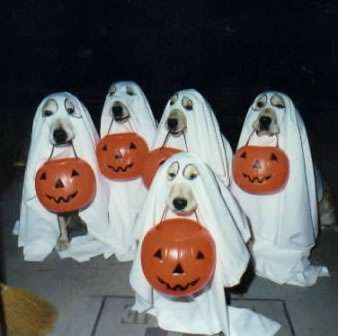 Funny Pictures of Dogs Trick or Treating