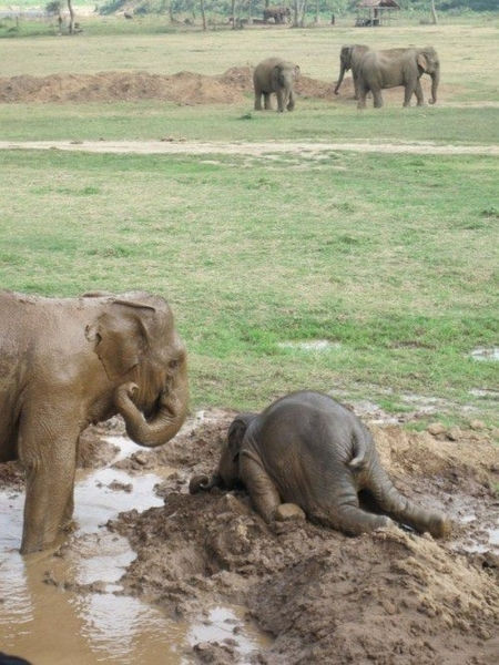 elephant exhaustion