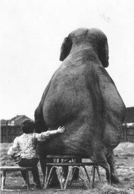 Funny Pictures of Elephant Sitting Down with Trainer