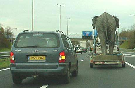 Funny Picture of Elephant Travelling On Trailer