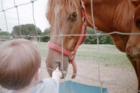 Funny Pictures of Kid Picking Horse's Nose