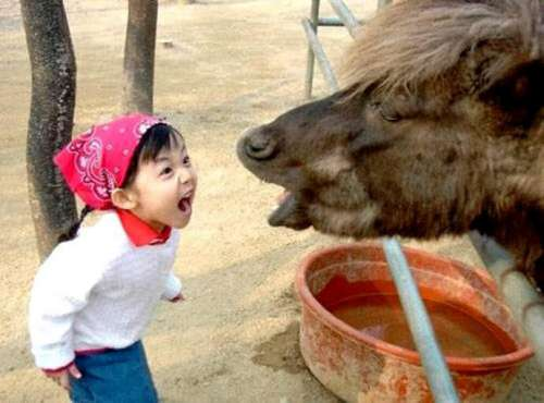 Funny Pictures of Little Girl Yelling at A Horse