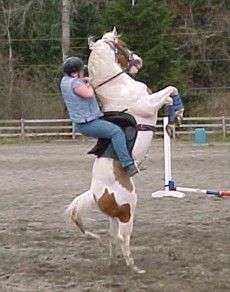 Funny Pictures of Horse Standing Up With Rider