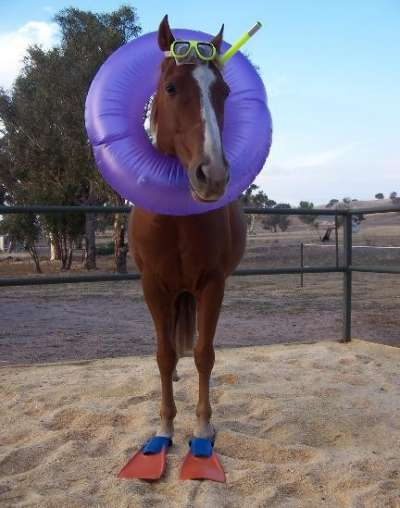 Funny Pictures of Horse in Swim Fins and Snorkel