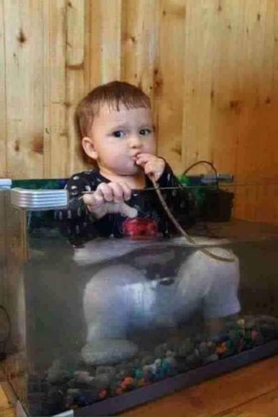 Funny Picture of kid in aquarium