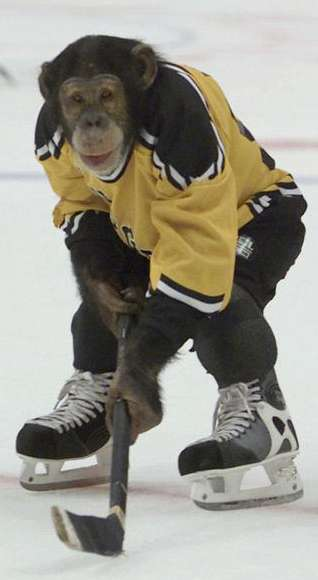 Funny Pictures of Monkey Playing Hockey