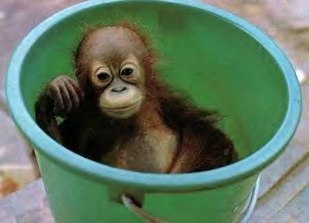 Funny Pictures of Moneky in a Pail