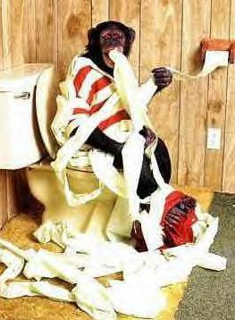 Funny Pictures of Monkey Sitting On A Toilet.
