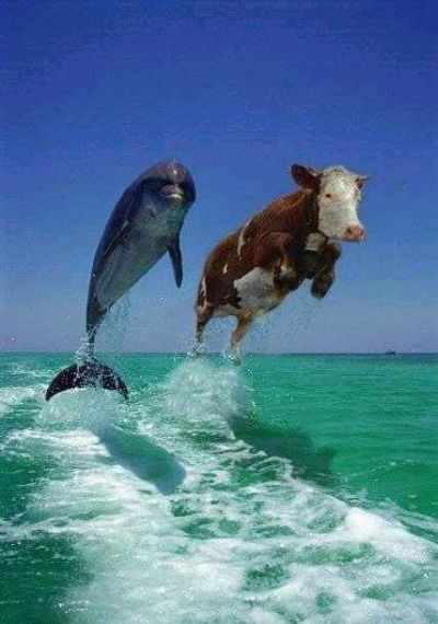 Funny Pictures of Dolphin Stress Test