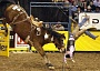 Funny Pictures of Horse Bucking Cowboy