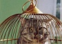 Funny Cat Pictures -  in Bird Cage