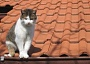 picture of cat on roof