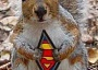 Funny Pictures of Superman Squirrel