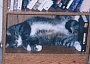 Funny Cat Pictures -  Sleeping on Shelf