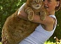 Funny Pictures of A Big Fat Cat