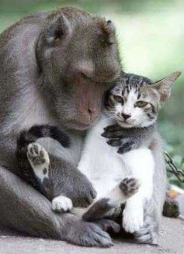 Funny Pictures of Baboon Holding Cat