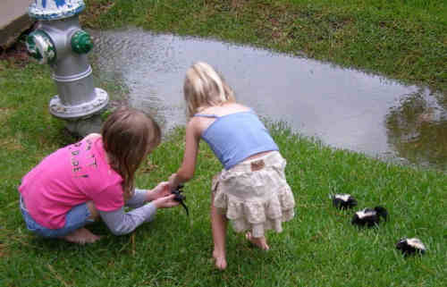 Funny Pictures of Kids with Baby Skunks