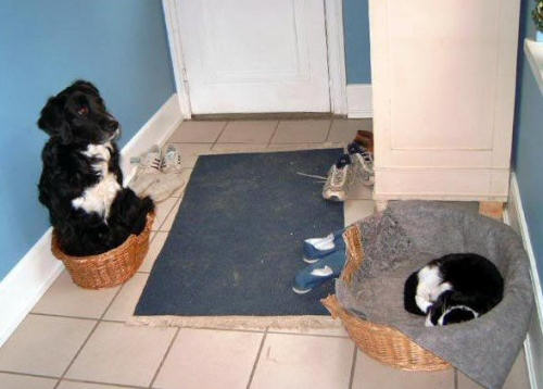 Funny Cat Pictures -  and Dog In Baskets