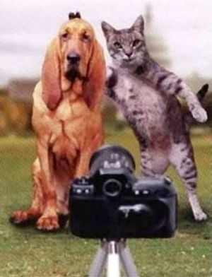 Funny Cat Pictures -  and Dog Photo Prank