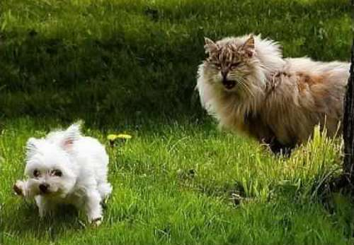 six toed cats