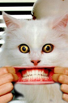 Smiling Cat With Human Teeth