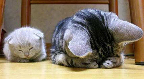 Funny Cat Pictures -  and Kitten Praying