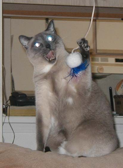 Funny Cat Pictures -  With Glowing Electric Eyes
