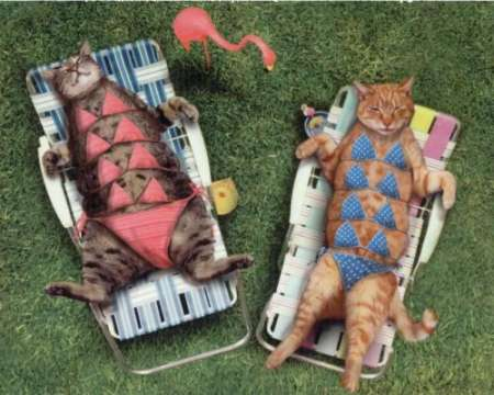 Funny summer cat picture