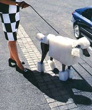 Funny Jokes Picture of Dog with Square Haircut
