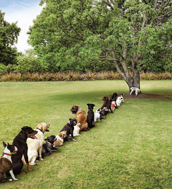 dogdeforestation