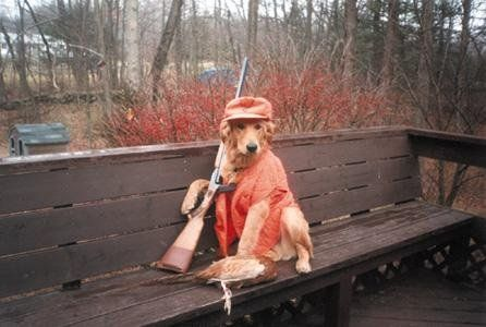 Funny Pictures of Hunting Dog with Shot Gun and Kill
