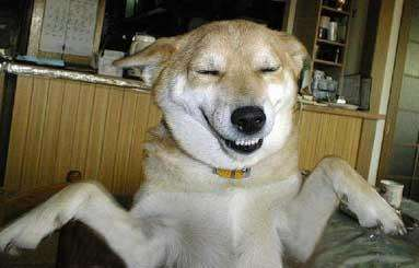 Funny Pictures of Mocking Dog Grinning
