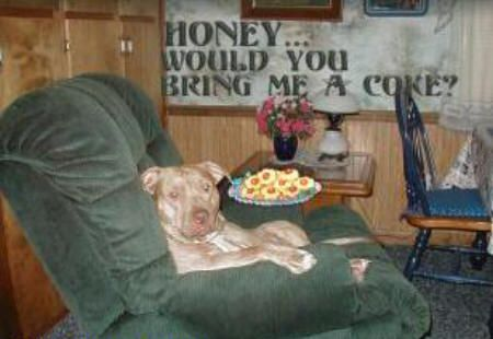 Funny Jokes Picture of Dog In Chair