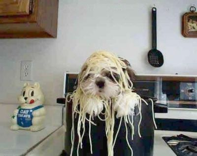 Funny Pictures of Dog In Pot of Spaghetti.