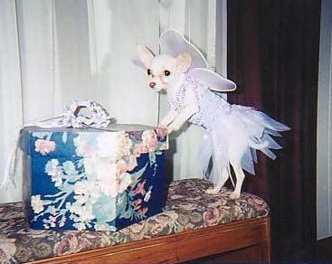 Funny Jokes Picture of Dog In TuTu