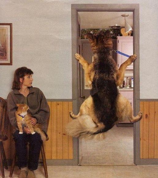 Dog Vet Visit Funny Dog Pictures Entertainment
