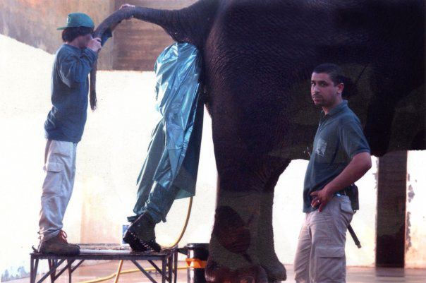 A funny picture of a zookeeper with his arm in an elephant.