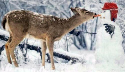 Funny Pictures of Deer Eating Snowman's Carrot Nose
