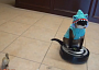 cat shark video